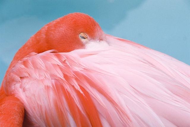 米津玄師ZIP出演『Flamingo(フラミンゴ)』インタビュー【その1】全3回!