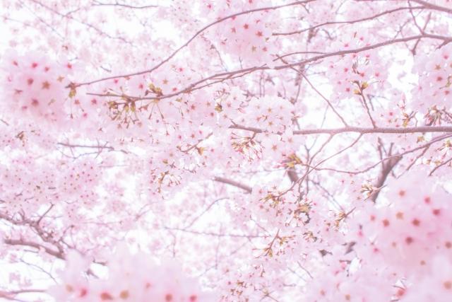 DA PUMP(ダパンプ)『桜』 ピアノ楽譜の発売日★ファビュラス!