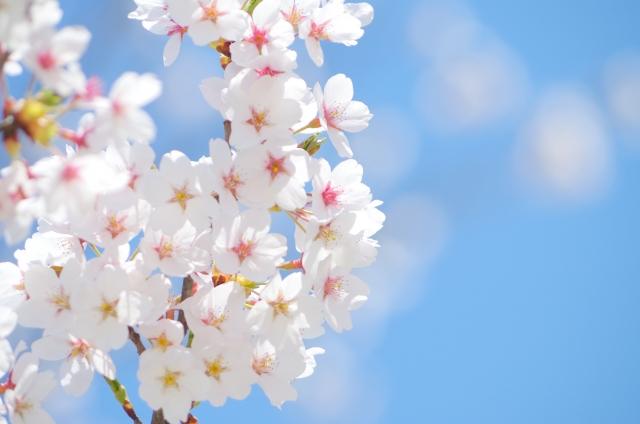 2019春『桜ソング』ピアノ楽譜ベスト8【初級かんたん編】卒業卒園送別会に