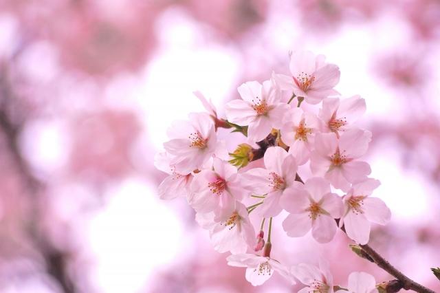 2019春『桜ソング』ピアノ楽譜ベスト10【中級編】卒業卒園謝恩会に