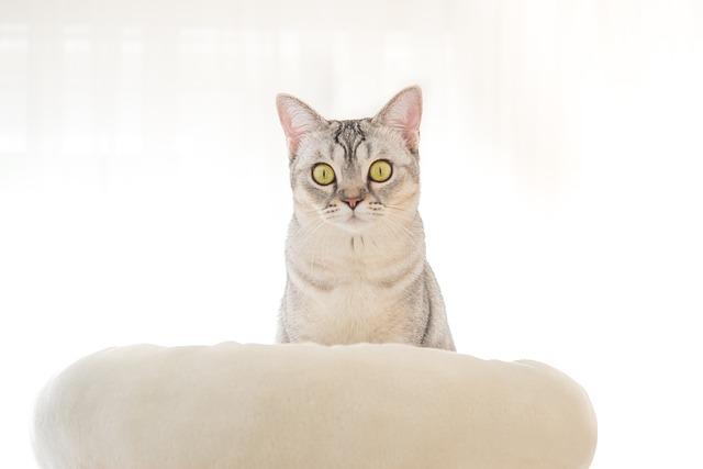 cat-3635298_640