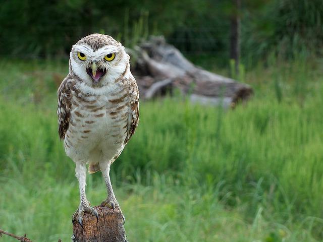 owl-774518_640